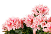 Big bouquet of pink colours. (Clipping path) — Stock Photo