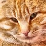 ������, ������: Cat Drawing Realism