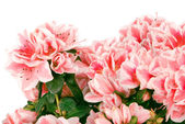 The big bouquet of pink colours (Clipping path) — Stock Photo
