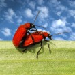 Loving each other red beetles — Stock Photo