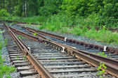 Railway in a forest — Stock Photo