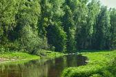 Ver en la orilla del río verano — Foto de Stock