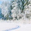 Stock Photo: Winter snowy landscape