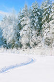 Winter snowy landscape — Stockfoto