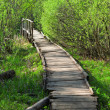 Bridge in a spring forest — Stock Photo