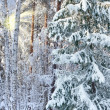 Winter landscape with frozen trees — Stock Photo