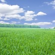 Beautiful spring field — Stock Photo