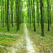 Beautiful green forest — Foto Stock