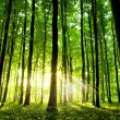 Beautiful green forest — Stock Photo #14254099