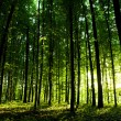 Beautiful green forest — Stock Photo #14254147