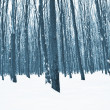Forest trees nature — Stock Photo