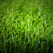 Stock Photo: Green grass natural background.