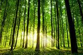 美丽的绿色森林 — 图库照片