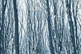 Forest trees nature snow — Stock fotografie