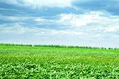 Green grass under blue sky — Stock Photo
