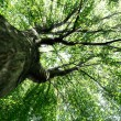 Nature green wood sunlight backgrounds — Stock Photo #14262199