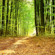 Beautiful green forest — Stock Photo #14262361