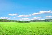 Campo verde, sob o céu azul — Foto Stock