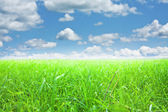Mavi gökyüzünün altında yeşil çimen — Stok fotoğraf