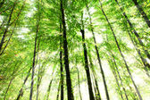 Nature green wood sunlight backgrounds — Stock Photo