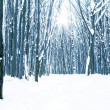 Forest trees nature snow wood backgrounds — Stock Photo #19157961