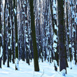 Forest trees nature snow wood backgrounds — Stock Photo #19157965