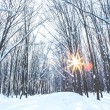 Forest trees nature snow wood backgrounds — Stock Photo #19157967