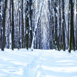 Forest trees nature snow wood backgrounds — Stock Photo #19157991