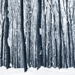 Forest trees nature snow wood backgrounds — Stock Photo #19158003