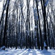 Forest trees nature snow wood backgrounds — Stock Photo #19158007