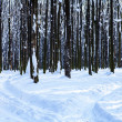 Forest trees nature snow wood backgrounds — Stock Photo #19158071