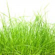 Green grass isolation — Stock Photo #19158507