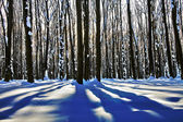 Sunset in a winter forest — Stock Photo