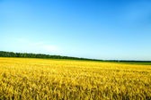 Beautiful spring field with the blue sky — Stock Photo