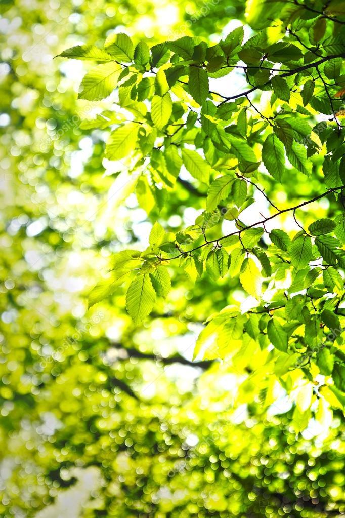 绿草和树叶.春天背景– 图库图片