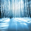 Forest trees nature snow wood backgrounds - Stock Photo