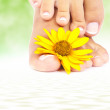 Soft female feet with pedicure and flowers close up — Stock Photo