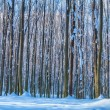 Forest trees nature snow wood backgrounds — Stock Photo #26213589