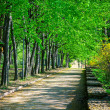 Beautiful avenue in to the park — Stock Photo #26213621