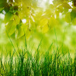 Tree branch over blurred green leaves background — Stock Photo