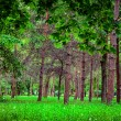 Nature green wood sunlight backgrounds — Stock Photo #26213923