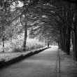 Stock Photo: Beautiful avenue in to the park