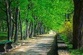 公園で美しい大通り — ストック写真