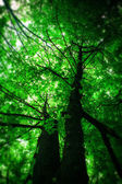 Forest trees. nature green wood sunlight backgrounds. — Stock Photo