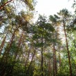 Stock Photo: Forest trees nature green wood sunlight backgrounds