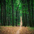 Beautiful green forest — Stock Photo #31750333