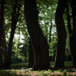 Nature green wood sunlight backgrounds — Stock Photo #31750341