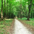 Beautiful green forest — Stock Photo