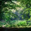 Beautiful green forest — Stock Photo #31750493