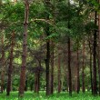 Nature green wood sunlight backgrounds — Stock Photo #31750587